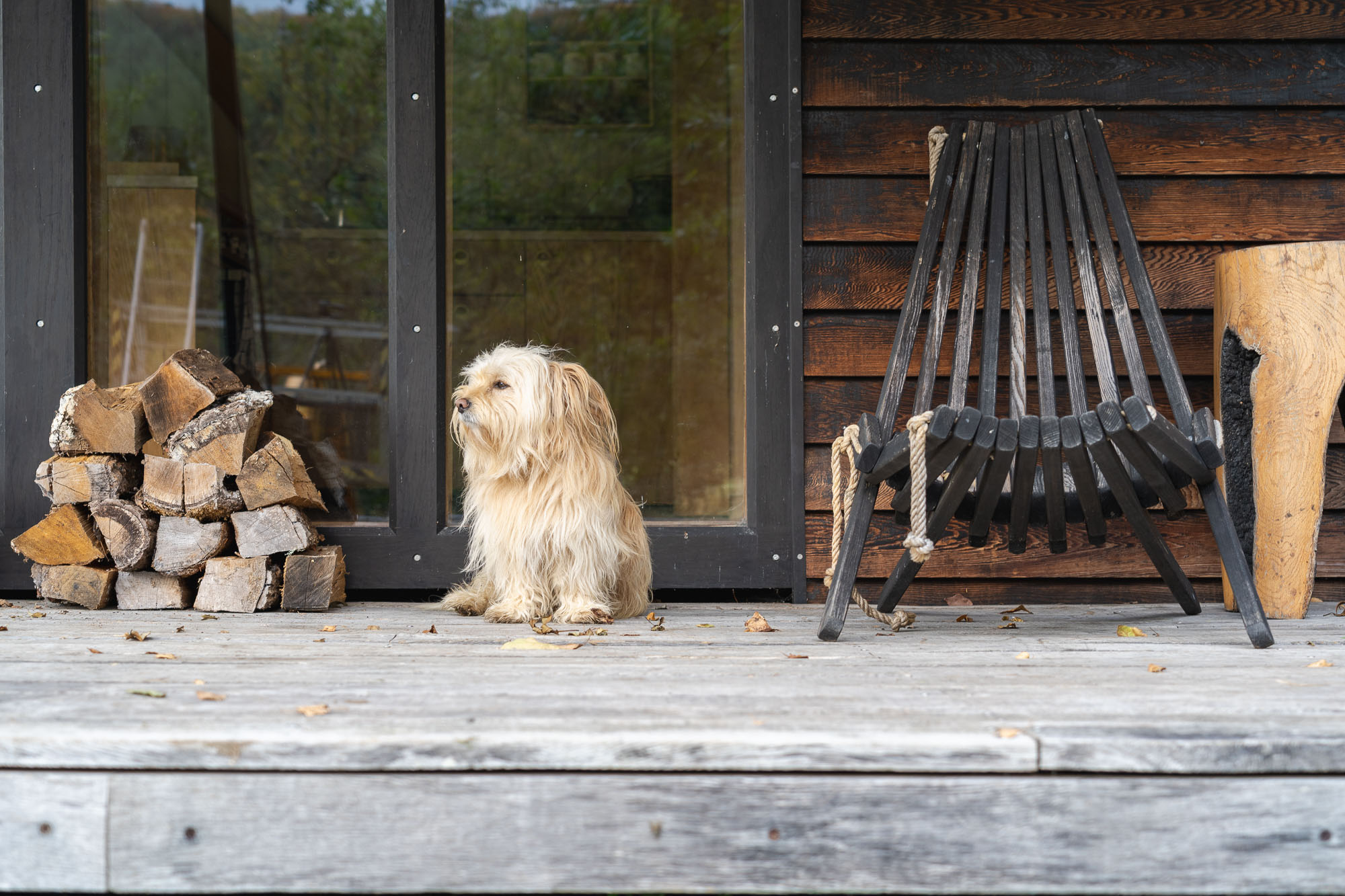 off grid wooden cabin with black cladding with dog sitting on veranda beside stack of logs